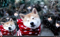 系围巾的狗狗xp主题