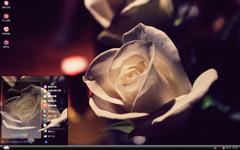 白色的玫瑰xp主题