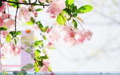 唯美的粉色花卉自然风景Win7主题