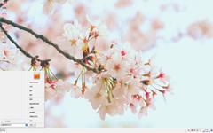 唯美清新的櫻花景色Win7主題