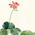 唯美插画水彩花朵锁屏 v1.5